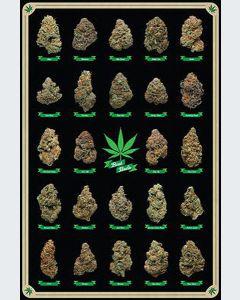 Cannabis Best Buds