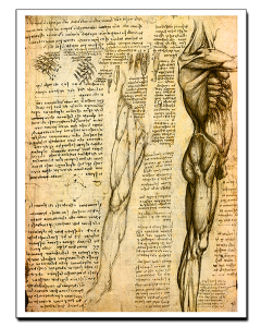 Leonardo da Vinci Estudio Anatómico VI