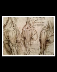 Leonardo da Vinci Estudio Anatómico V