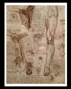 Leonardo da Vinci Estudio Anatómico