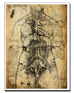 Leonardo da Vinci Estudio Anatómico III