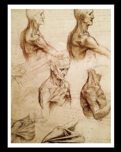 Leonardo da Vinci Estudio Anatómico II